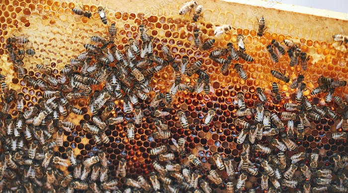Detailed view of honeycomb full of bees. Conception of apiculture