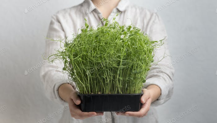 Unrecognizable Girl carrying microgreens over gray background