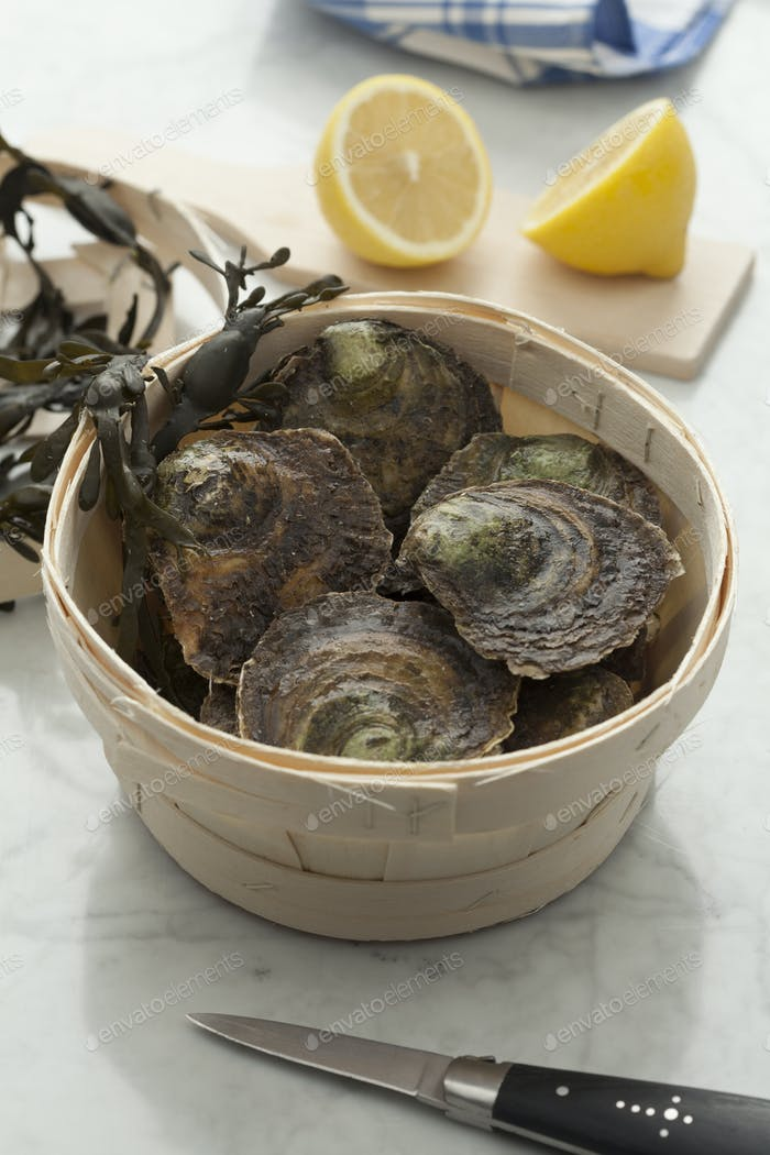 Fresh European flat oysters