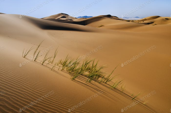 Grasses in sand dunes, Namib-Naukluft National Park, Namibia