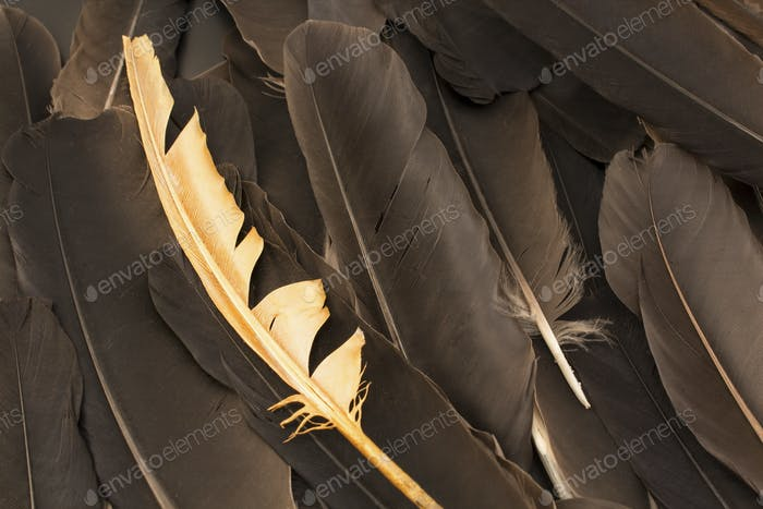Concept of Individuality,  Feathers