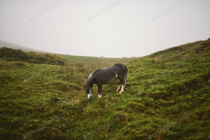 Horse in Brecon Beacons National Park, UK