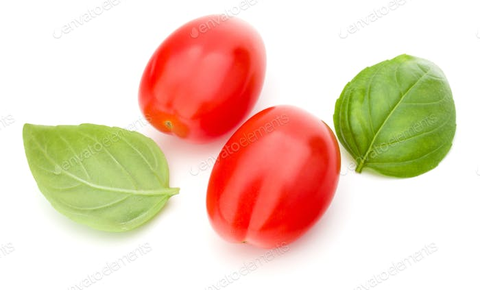 fresh plum tomato with basil leaf isolated on white background