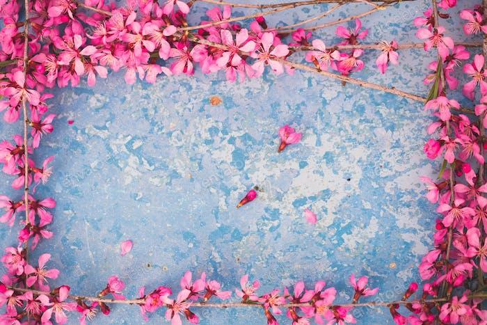 Frühlingsblühende Zweige, rosa Blüten auf blauem Hintergrund