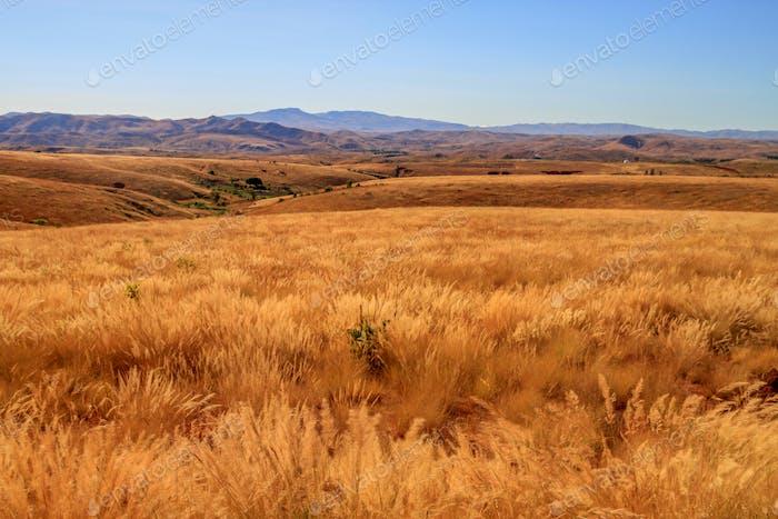 Madagaskar Trockengrünland