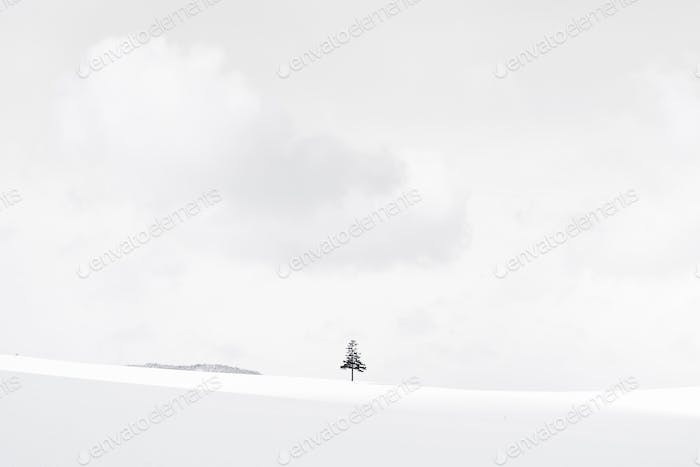 Beautiful outdoor nature landscape with christmas tree in winter