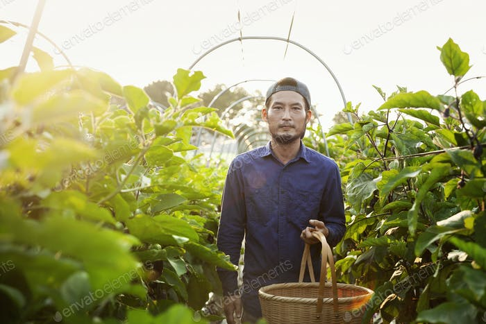 Japanese man wearing cap standing in vegetable field, holding basket, looking at camera.