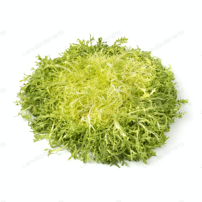 Head of fresh frisee lettuce