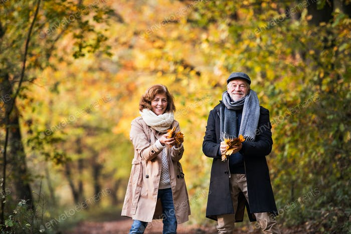 Senior couple on a walk in a forest in an autumn nature, holding leaves.