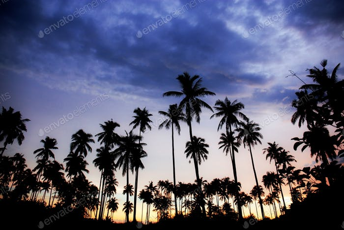 Palm tree with silhouette at sky