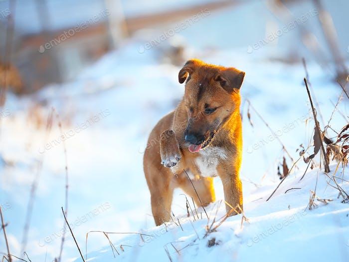 junger Welpe auf Schnee im Winter