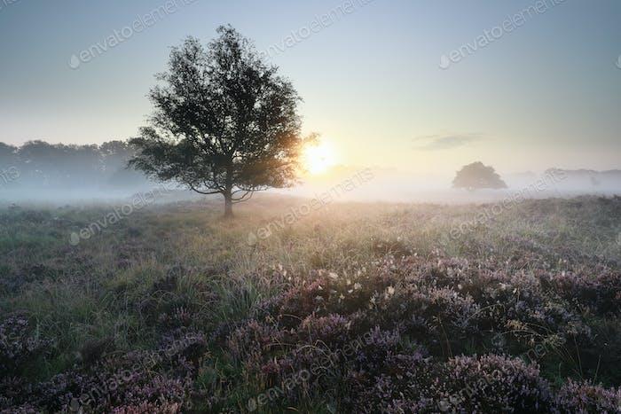 ruhig schön neblig Sonnenaufgang über Heide