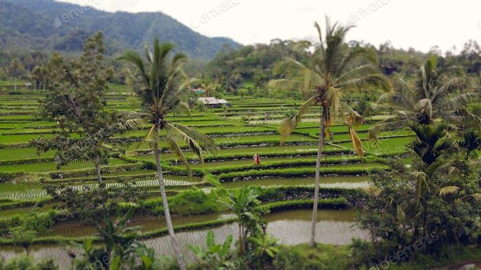Couple walking in a rise field on a Bali