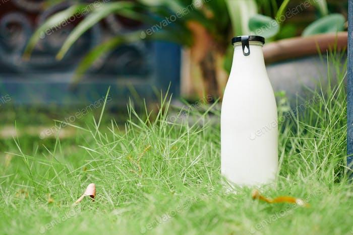 Delivered milk or yogurt bottle