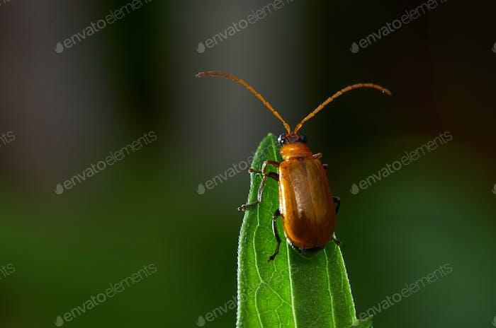 Bug on the green leaf