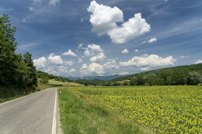 Summer landscape near Lippiano, Umbria, Italy