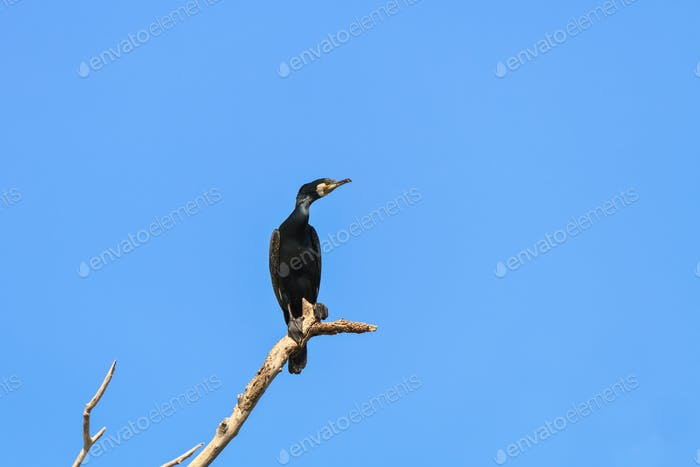 cormorant in a tree