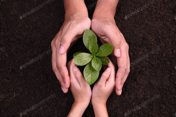 Hands protect Plant