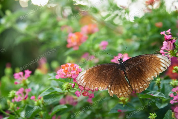 Brow butterfly perching on plant