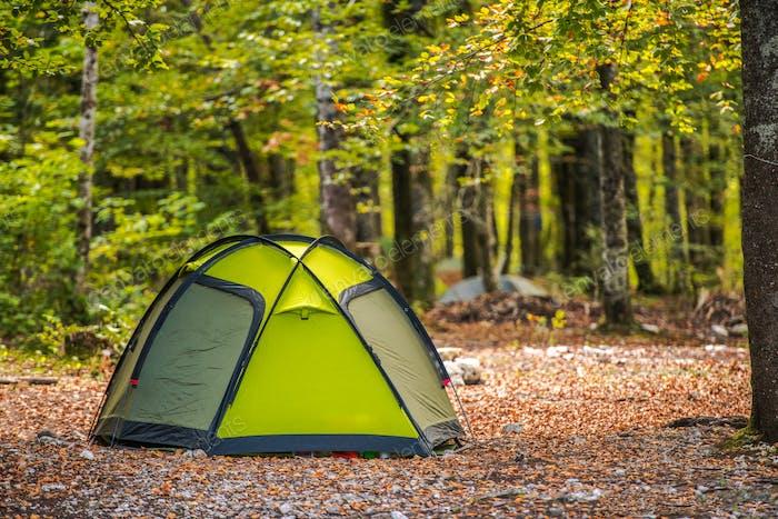 Scenic Forest Campsite