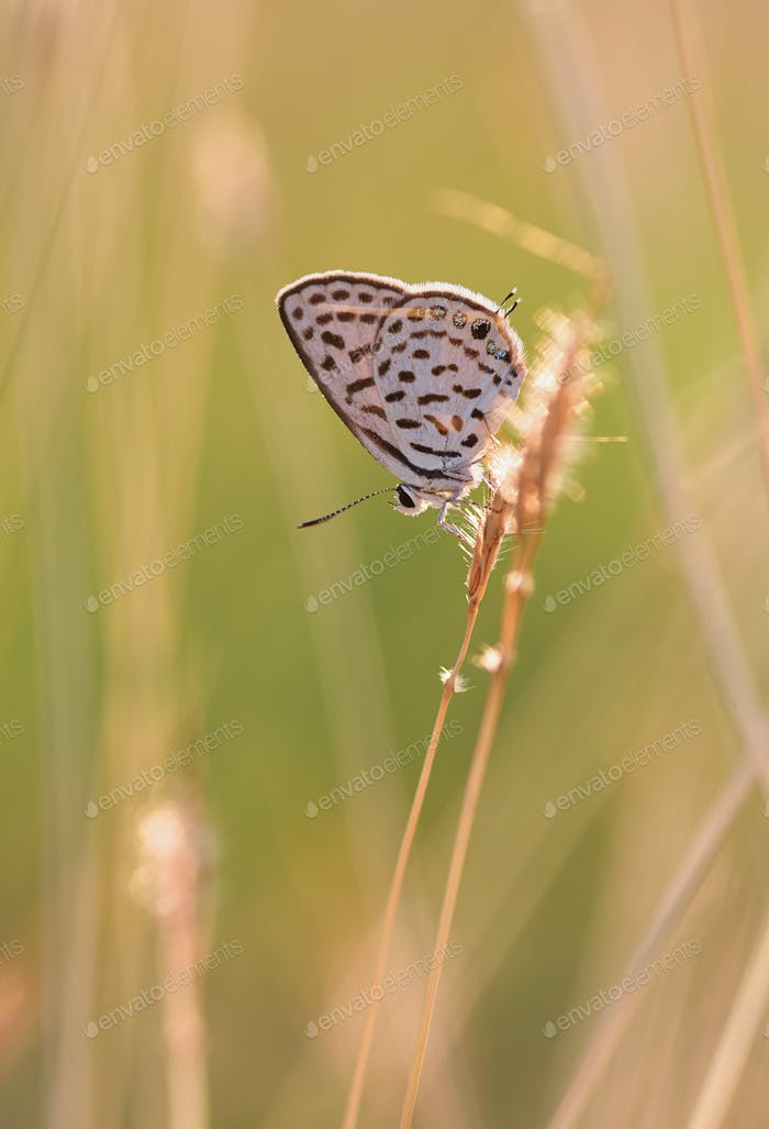 Butterfly perching on a grass stem