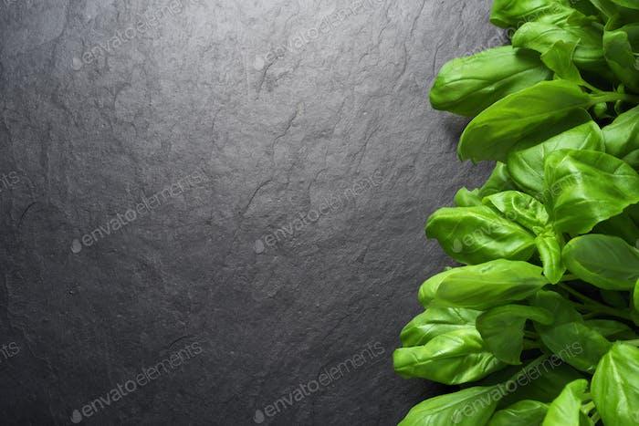 Bunch of fresh green basil leaves on black background