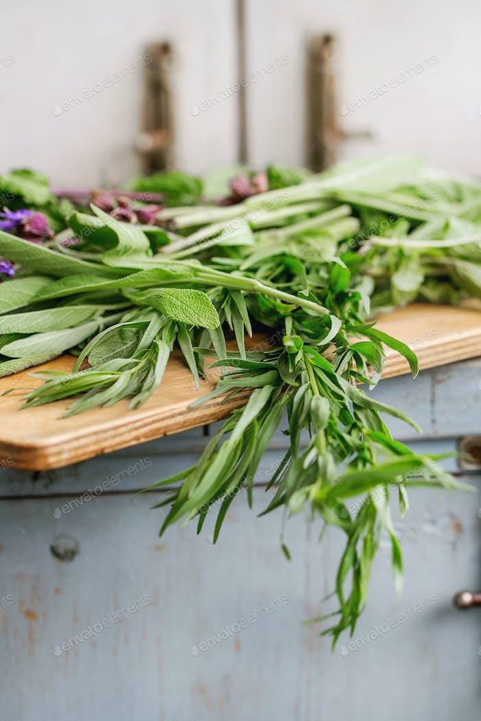 Various of garden herbs