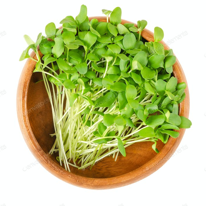 Flax microgreens in wooden bowl over white