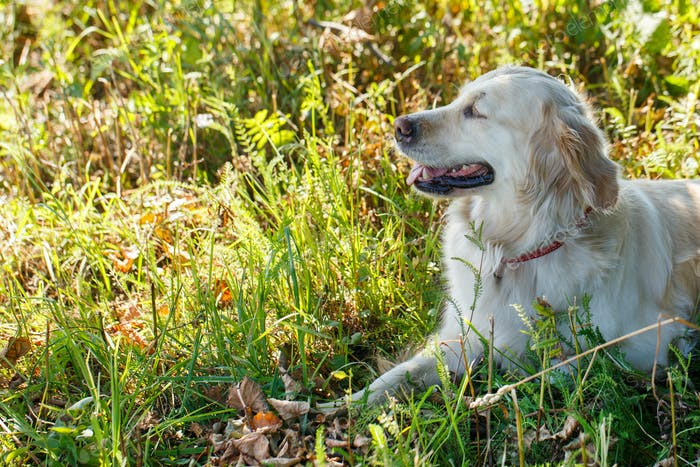 Adorable dog in the grass