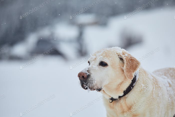 Portrait of cute dog in snowy nature