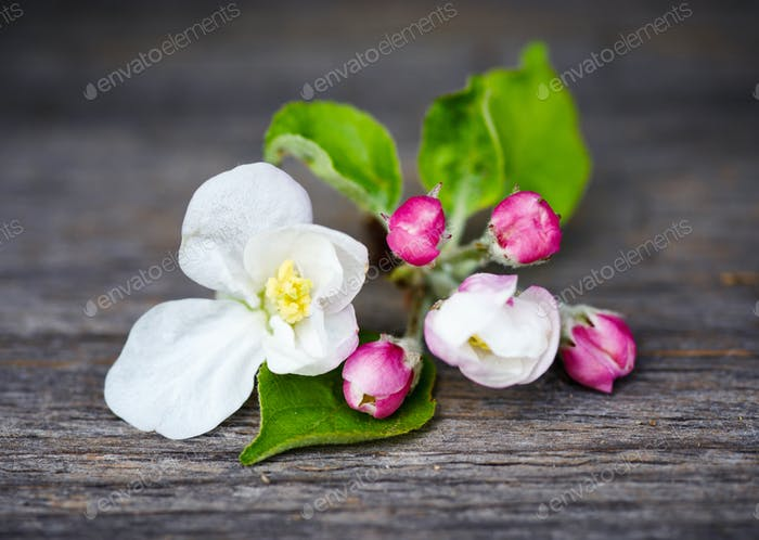 Apple flowers on old wooden background
