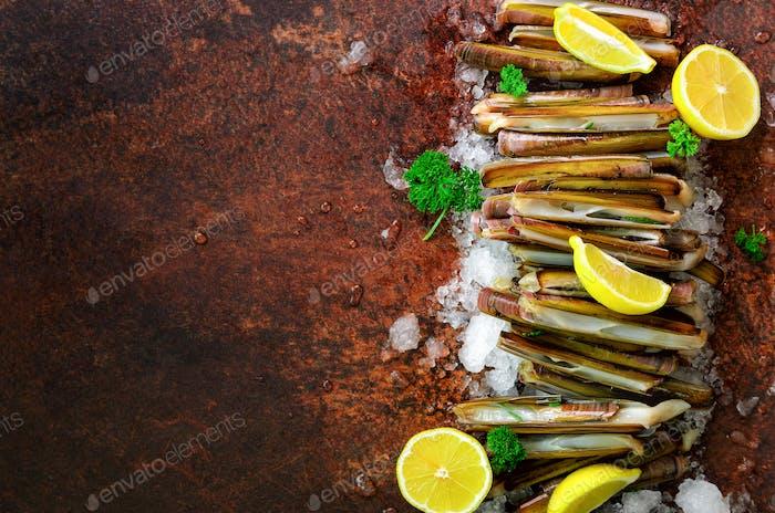 Bundle, bunch of fresh razor clams on ice, dark concrete background, lemon, herbs. Copy space, top