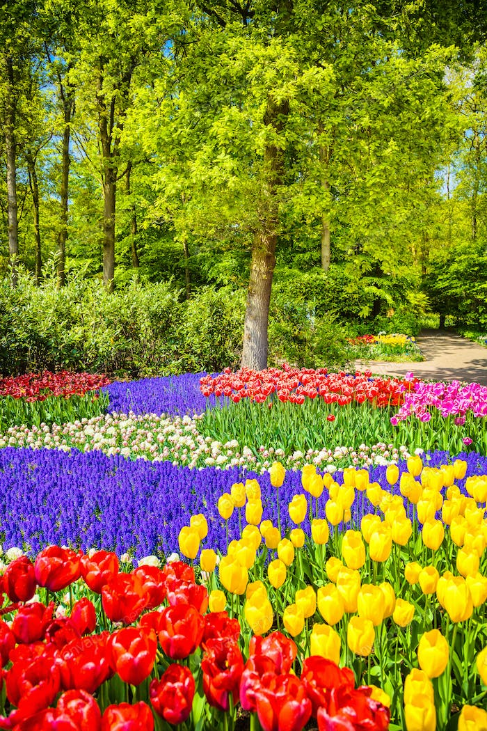 Tree and tulip flowers in spring garden. Keukenhof, Netherlands,