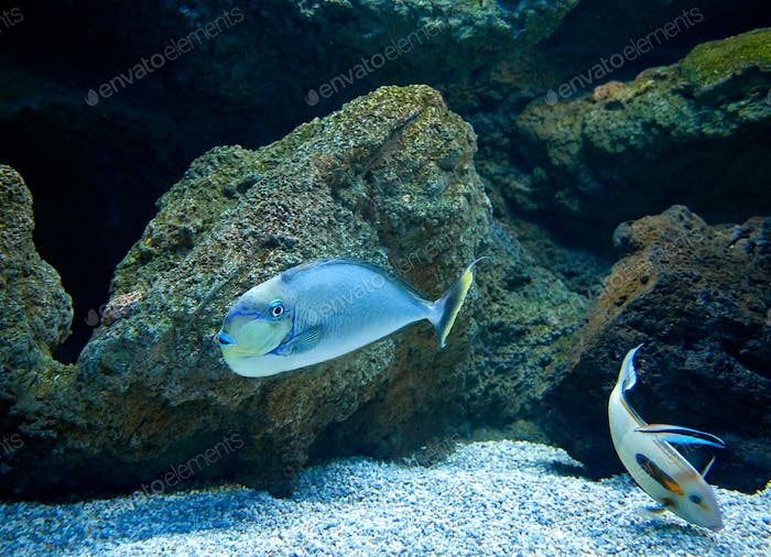 fishes swimming in marine aquarium