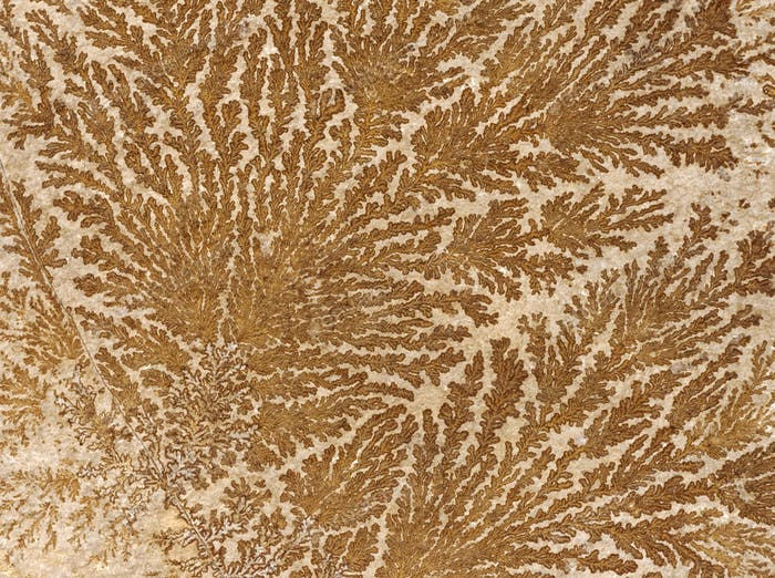 Abstract fossilized tree-like pattern on a stone surface