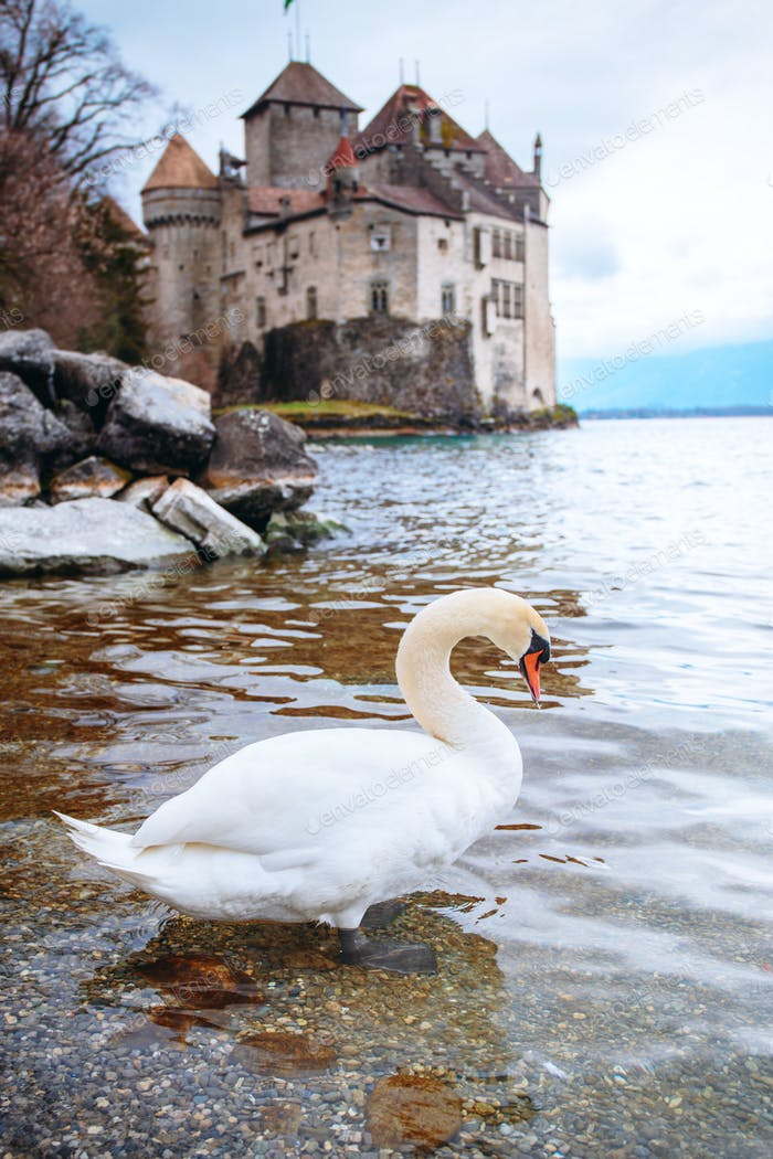 Swan against old castle