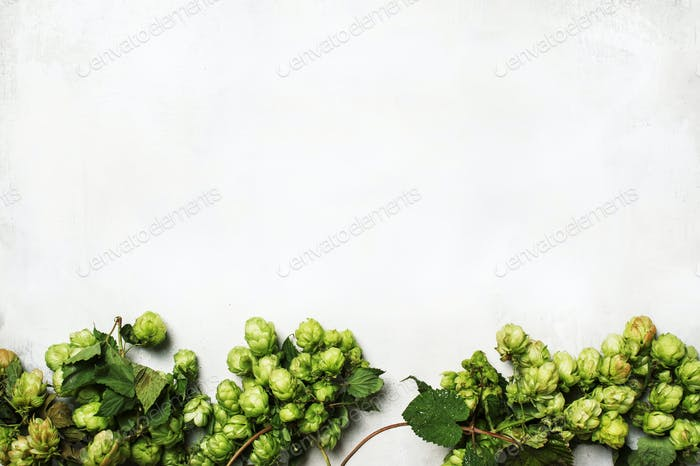 Green hop cones with leaves on gray background