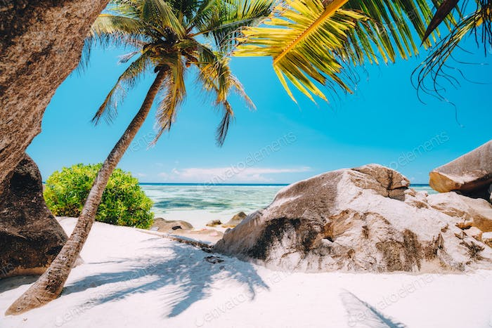 Path with palm trees along the Anse Source d'Argent beach at La Digue island, Seychelles