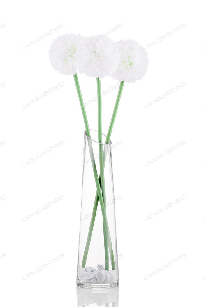 White Giganteum in vase isolated on white background