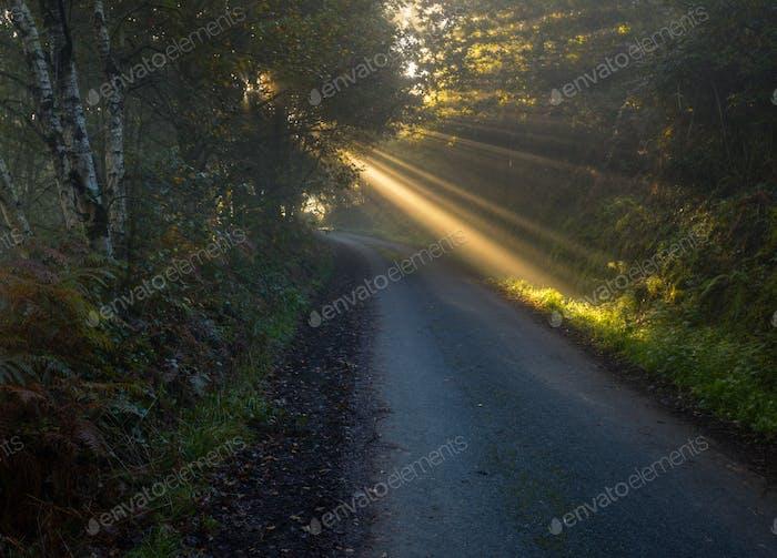 Sunbeams break through the foliage of trees