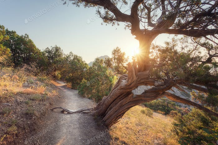 Beautiful view with old tree growing on the mountain