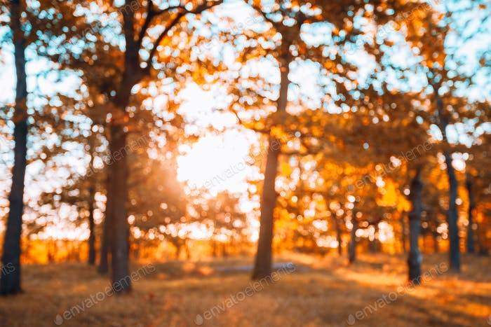 Abstract Autumn Blurred Forest Background. Bokeh, Boke Woods Wit