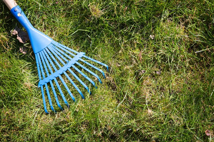 Blue rake