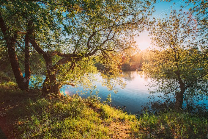 Sun Shining Through Branch And Foliage Of Tree Near River Or Lake At Spring Sunset Or Sunrise