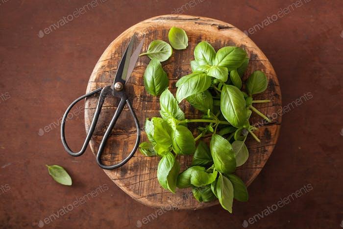 fresh basil herb on brown background