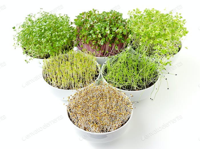 Triangle of microgreens and sprouts in white bowls