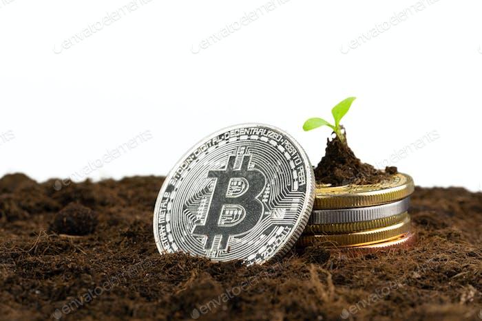 Planta de brotes y bitcoin, crecimiento de la moneda criptográfica bitcoin