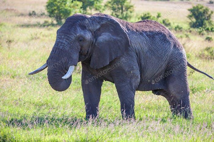 Elefantenfamilie zu Fuß in der Savanne