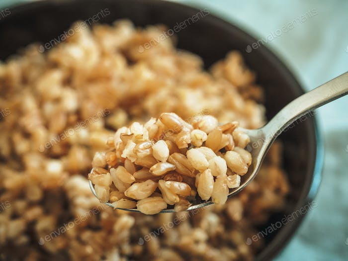 boiled spelt in spoon, selective focus