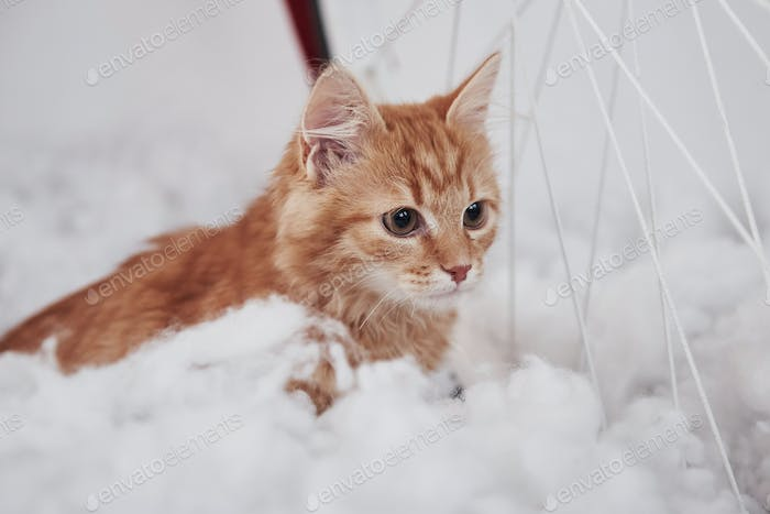 Close up view of cute cat on the fluffy white bed. Lovely nice pet